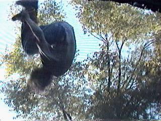 Flatspin Saftey on tramp, taken from below