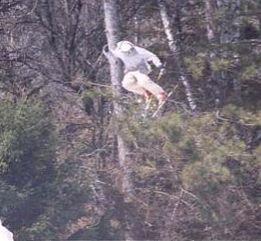 Paul Yih Rodeo 540 Japan at Tyrol Basin End of Season Comp 2002
