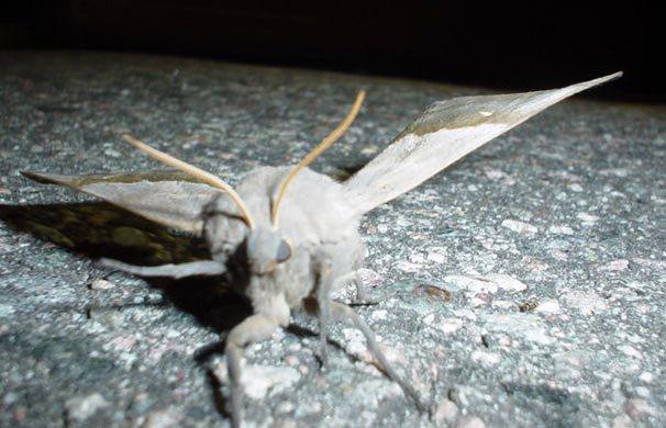 Mothra Lives!