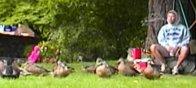 alpentalik and the ducks
