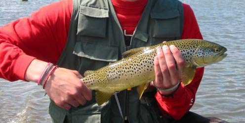 22 inch brown trout i caught on a fly i tied