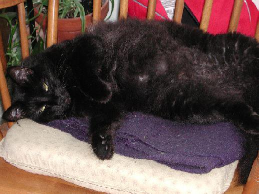 My lazy black cat, shes so lazy, her names Snowball.