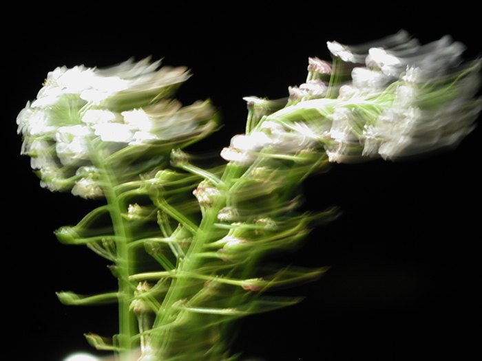 Flowers long exposure