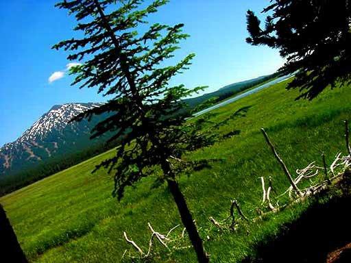 Mt. Bachelor - sweet meadow shot