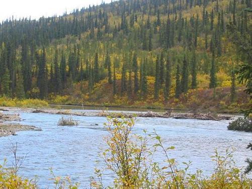 On the bank of Wells Creek
