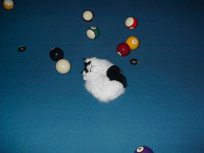 kitty playing with pool balls