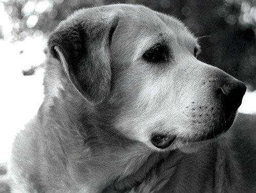 My Doggie!