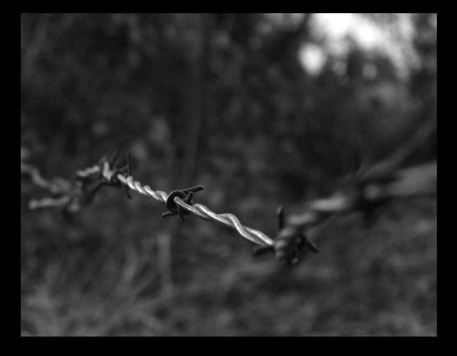 Long Barb Wire