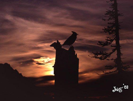 Bird silhouette at sunset