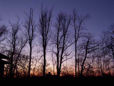 Backlit trees and a purple sunset