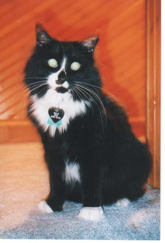 My Cat... Onyx