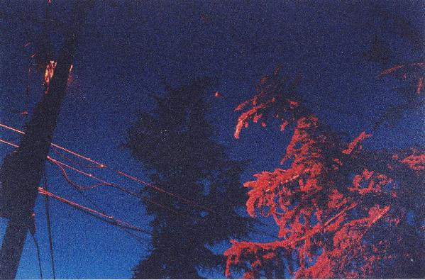 tree lit by a street light