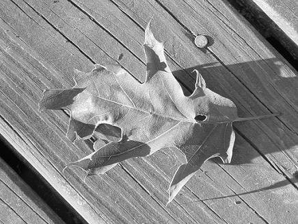 Cool Leaf Photo