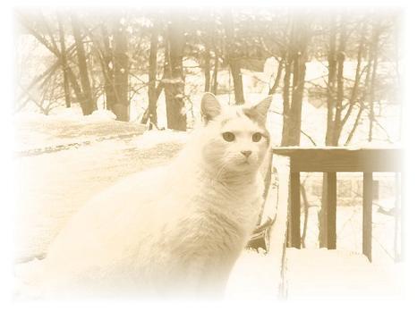 Cool Cat Pic Again