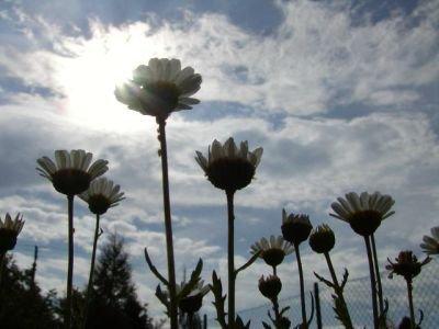 cooool loking flowers :)