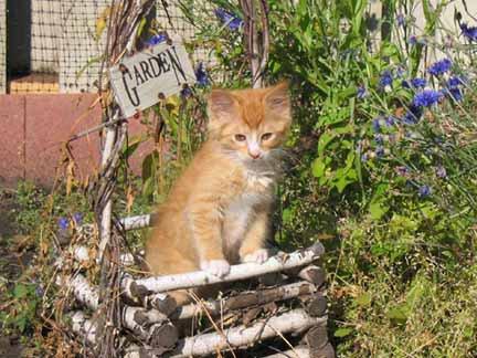great picture of my cat in my moms garden. calendar worthy