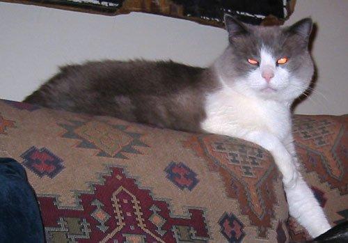 killer kitty from hell