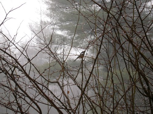 Bird in bush part1