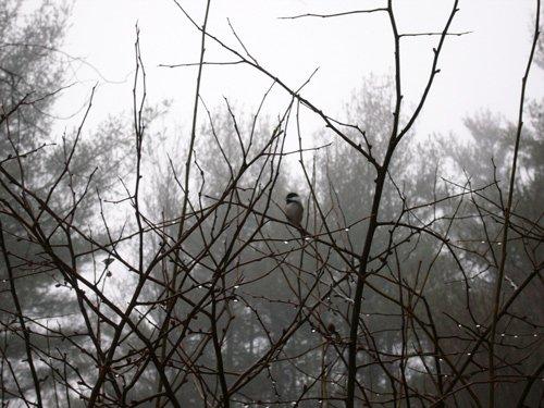 Bird in bush part2