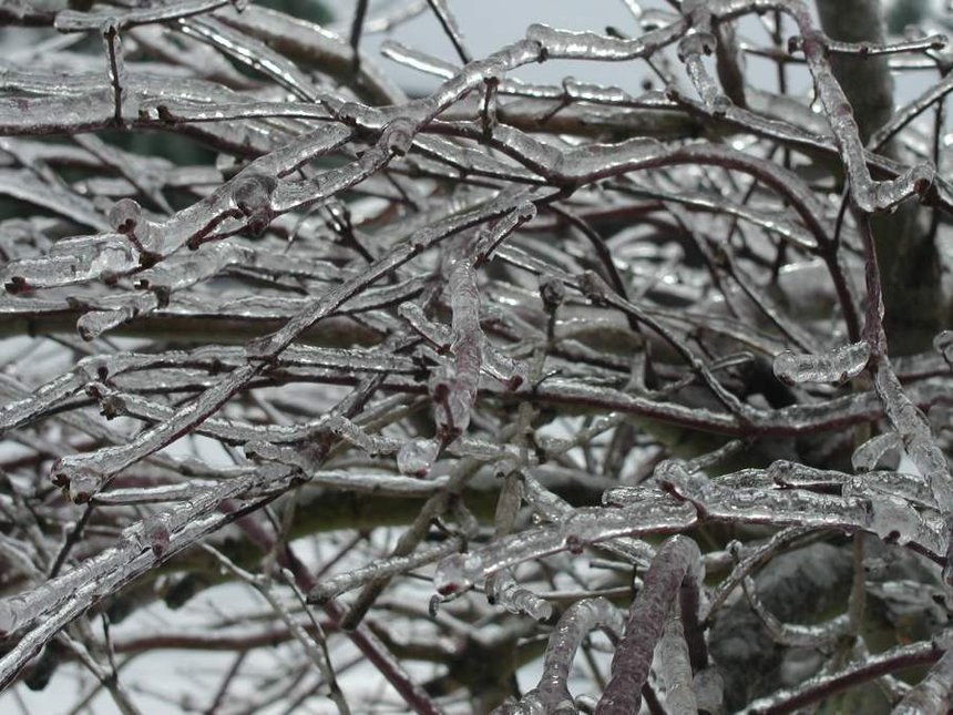 Icy Tree limbs