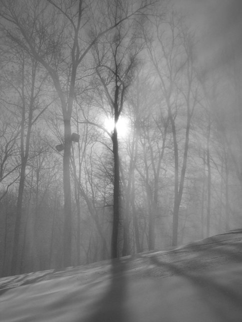 Trees in snowmaking with the sun