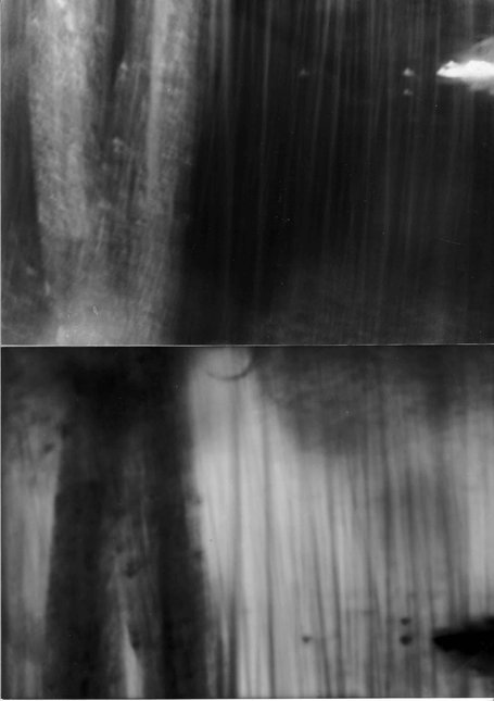 Transformation: Tree with snow long exposure, one reversed one negative