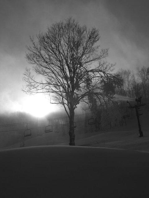 Tree during snowmaking
