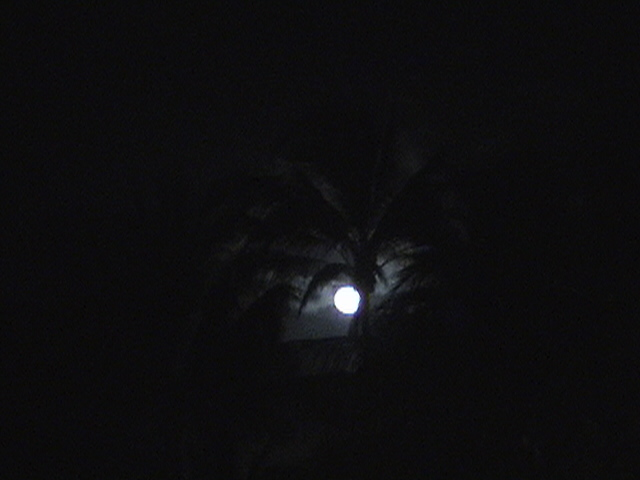 moon through the palm trees