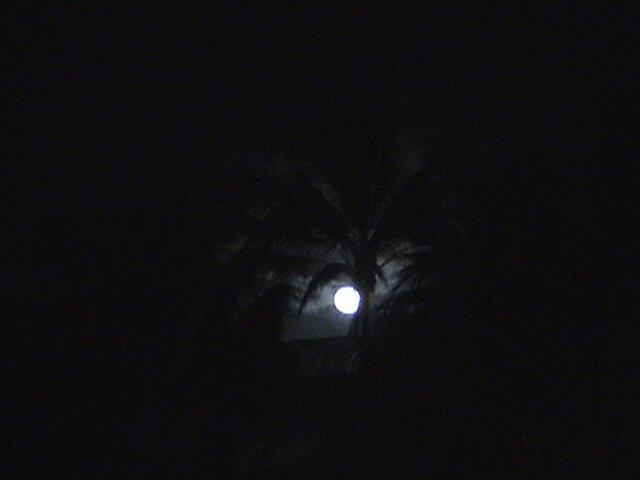 moon through the palm trees