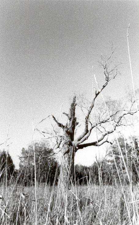 Rotting Tree in Long Grass