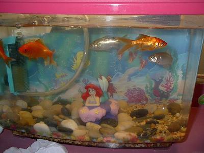 pretty fishies in the toughest aquarium ever