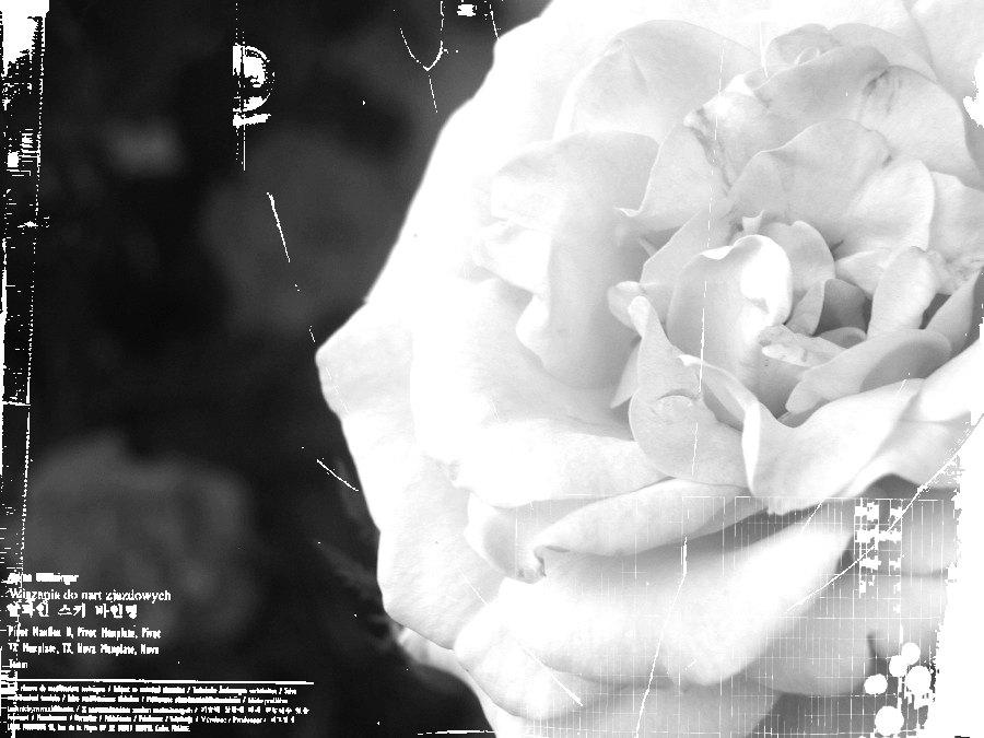 grungified rose