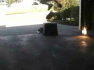 kickflip over box