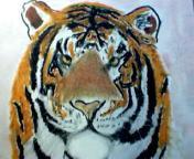 Tiger - Oil Pastels