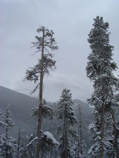 Perdy trees