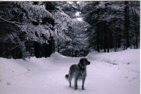 black and white of ma dog