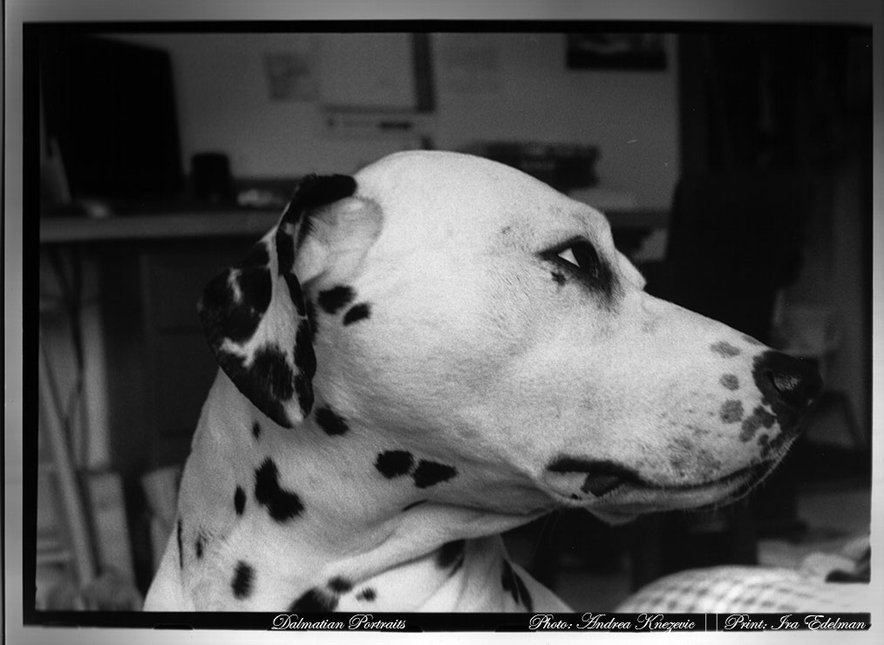 dalmatian - She took the pic, i developed it..