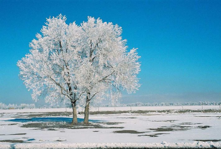 Picture: An Icy Tree