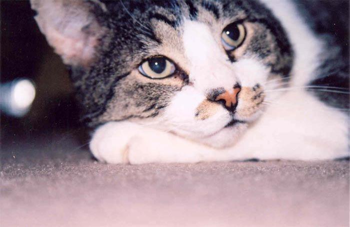 Our cat Vinnie looking pensive