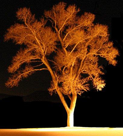 A tree at nite.