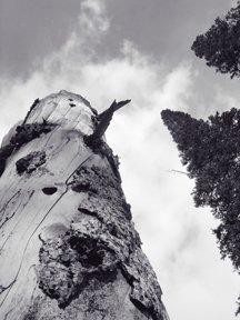 dead tree in copper glades