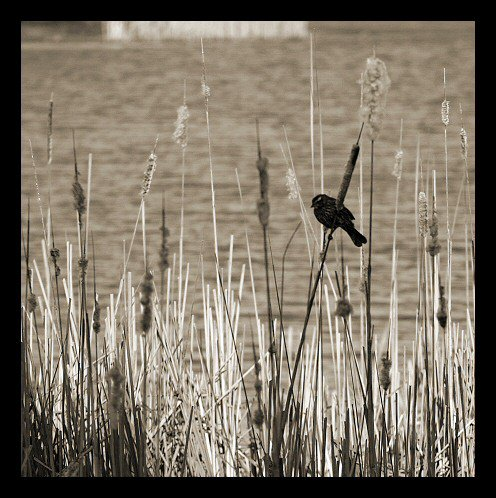 Bird Perched on Stalks