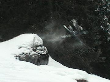 mute off a fallen tree