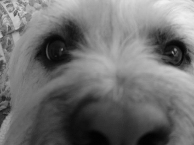 close up of my dog, kinda blurry?