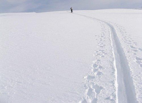 Skin Trail