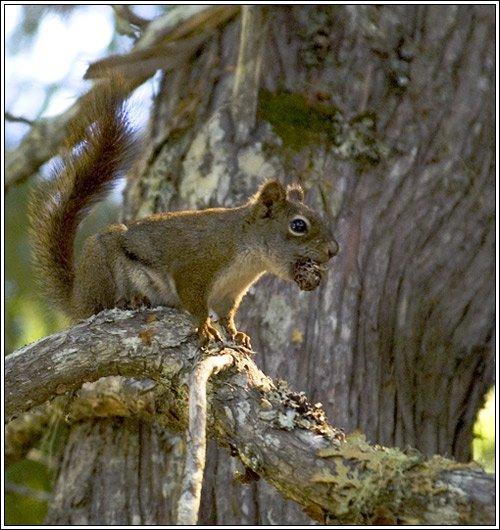 Squirrelizzle