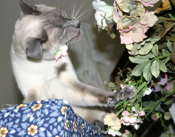 my cat biting a flower off