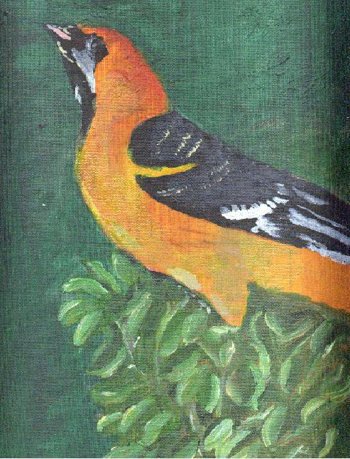 Oriole Oil Painting