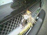 BIRD+TRUCK =.................................