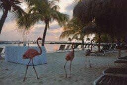 A cool shot of some flamingos in Aruba